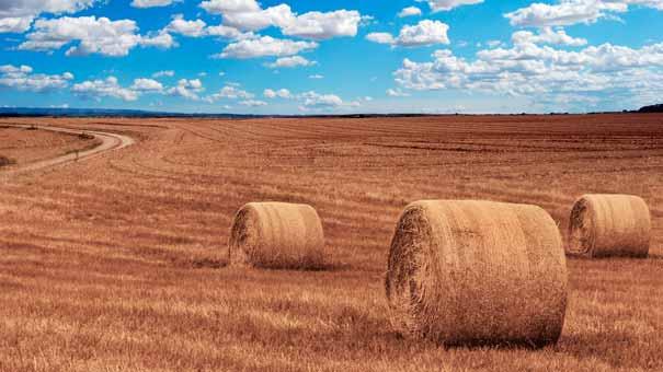 Ubezpieczenia rolne ubezpieczenia Siedlce